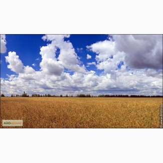 Куплю пшеницу разноклассовую