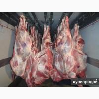 Продам мясо туши