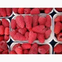 Продам свежую ягоду малины можно с поля