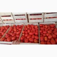 Продам помидор сорт, 3402