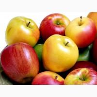 Продажа яблок в больших количествах