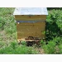 Прийму в дар вулики, бджолосімї