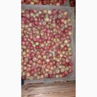 Продам яблука з холодильника( фрешовані )