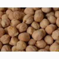 Продаем семена нута сорт Буджак 2018 года