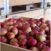 Продам яблоки айдаред и другие сорта