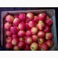 Продам сортові яблука на переробку
