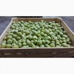 АКЦИЯ!!! Продажа с РГС камер свежего яблока урожай 2018 года