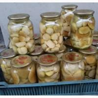 Продам мариновані білі гриби