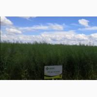 Семена озимого рапса Редстоун ГМО