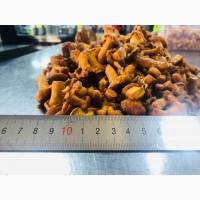 Продам замороженный гриб ЛИСИЧКА до 5 см (вся Украина), Львовская обл