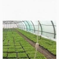 Вырастим для вас Рассаду Овощей под заказ (Помидор, Капуста и другие)